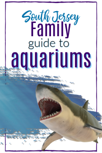 south jersey family guide to aquariums pinterest